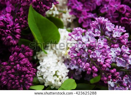 spring lilac flowers - nature background, close up - stock photo
