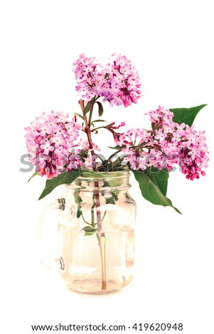 Spring Lilac Flowers on a White Background Studio Photo