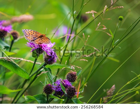 Spring meadow and silver-washed fritillary butterfly - stock photo
