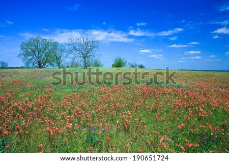 Spring meadow filled with wildflowers near Brenham--the capital of wildflowers in Texas