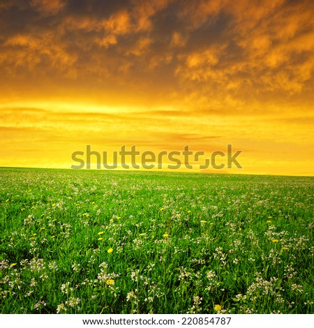 Spring meadow in the sunset