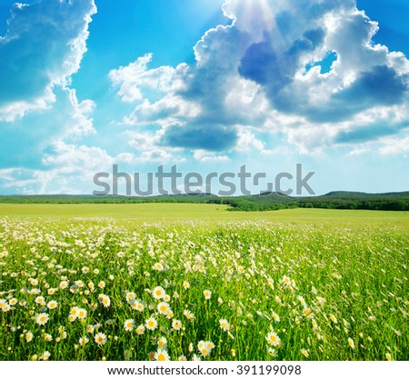 Spring meadow of flowers. Nature composition. - stock photo