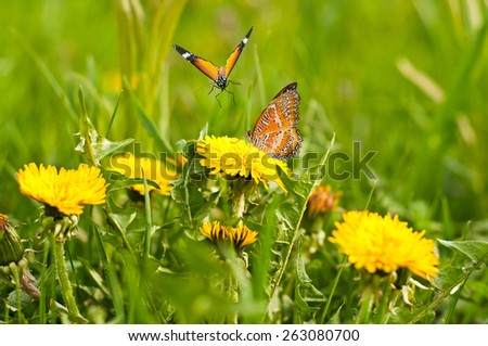 Spring meadow of yellow dandelions and butterflies - stock photo