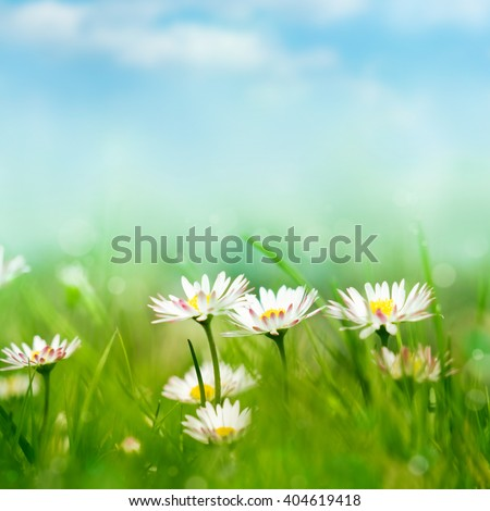 spring meadow with daisies - stock photo