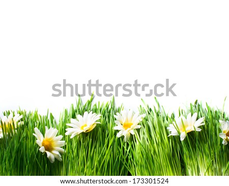 Spring Meadow with Daisies. Grass and Flowers border art Design isolated on White. Nature. Environment concept. Green Nature Background - stock photo