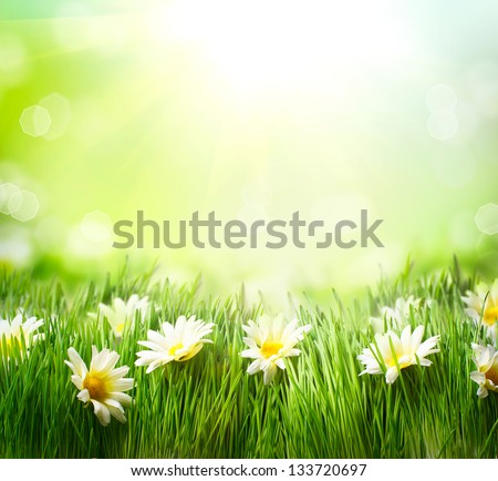Spring Meadow with Daisies. Grass and Flowers border art Design. Nature. Environment concept. Green Nature Background