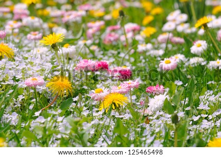 Spring Meadow with Daisy and Dandelion Flowers - stock photo
