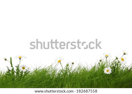 Spring meadow with grass and flowers isolated on white background - stock photo