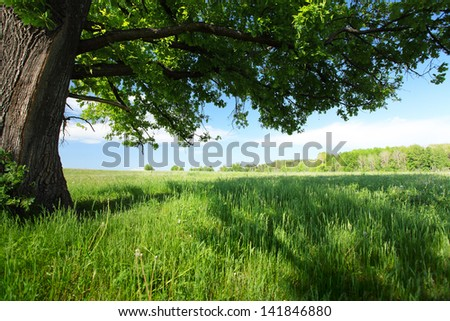 Spring meadow with green grass and old big oak - stock photo
