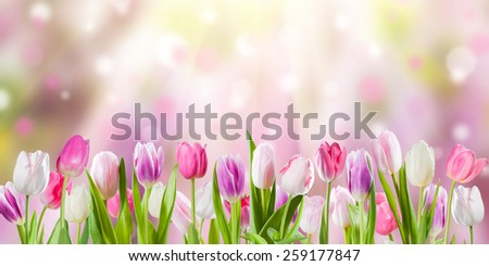 Morning gift stock images royalty free images vectors spring meadow with sunny flowers nature background negle Images