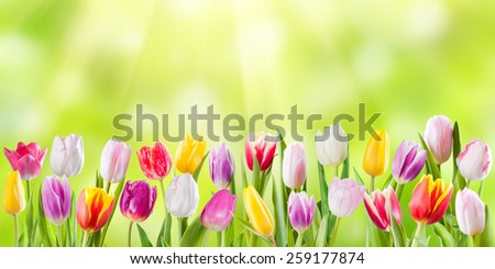 Spring meadow with sunny flowers, nature background - stock photo