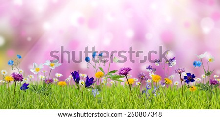 Spring meadow with sunny wild flowers, nature background - stock photo