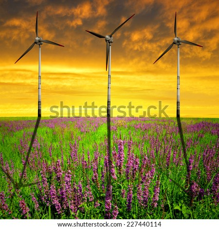 Spring meadow with wind turbines in the sunset - stock photo