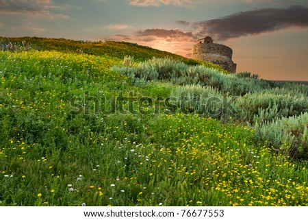 Spring meadow yellow flowers blooming on hill in Sardinia Italy old roman tower in background wildflower field green pasture peaceful landscape