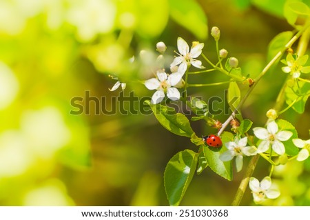 spring messenger, lady bug on flowering branch - stock photo