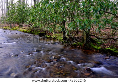 Spring, Middle Fork of Williams River, Monongahela National Forest, West Virginia, USA