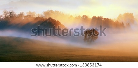 Spring Mist, trees are wet, damp fog of forest - stock photo