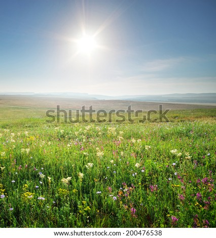 Spring morning in meadow of flowers. Composition of nature. - stock photo