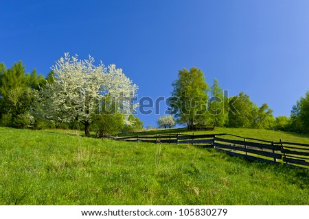 spring mountain landscape with blooming trees