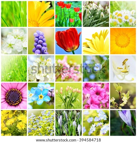 Spring natural abstract collage with plants and flowers in garden. A spring collection. Background collage. Spring theme collage. - stock photo