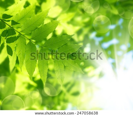 Spring natural background of bright green leaves