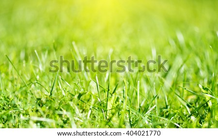 Spring natural backgrounds grass - stock photo