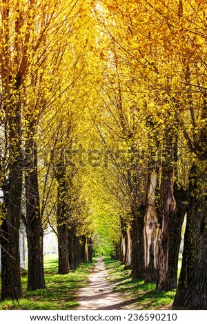 Spring nature background with blossom park alley/ The romantic tunnel of pink flower trees - stock photo