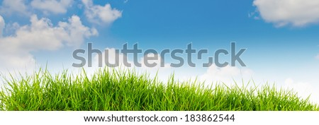 Spring nature background with grass and blue sky in the back .summer time - stock photo