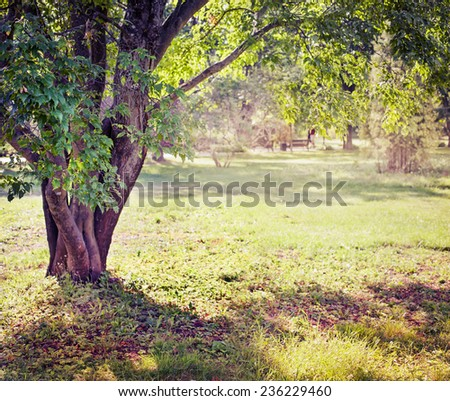 Spring nature background with sun beam / green landscape with sunshine/ Sunny forest early in the morning   - stock photo
