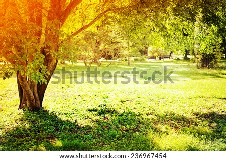 Spring nature background with sun beam / green landscape with sunshine/ Sunny park early in the morning - stock photo