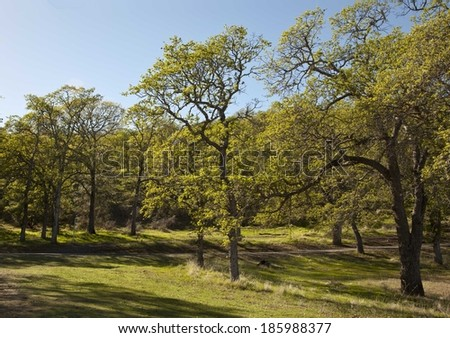 Spring nature background with sunshine / green landscape with sun beams/ Sunny forest early in the morning.