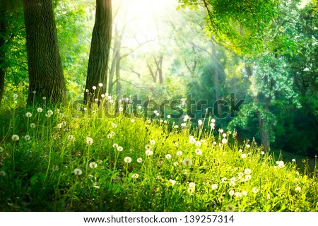 Spring Nature. Beautiful Landscape. Park with Green Grass and Trees. Tranquil Background - stock photo