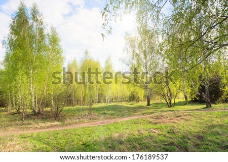 Spring nature beautiful landscape with green trees
