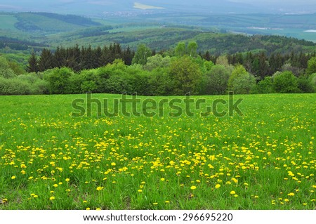 Spring nature forest, green landscape. - stock photo