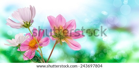 Spring nature.garden beautiful flowers - stock photo