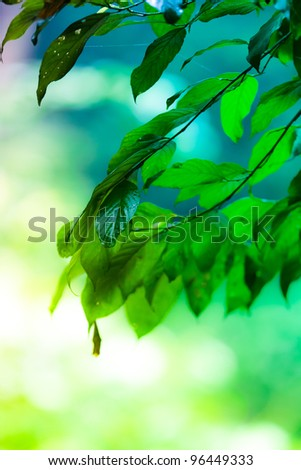 spring nature green leaf background