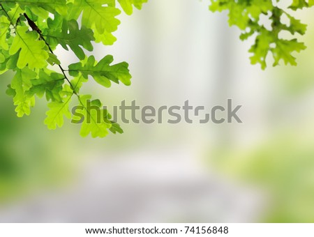 Spring oak leaves on a background of a blurred sunny forest