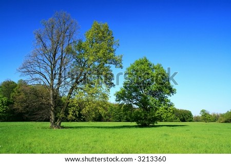 spring of the trees - stock photo