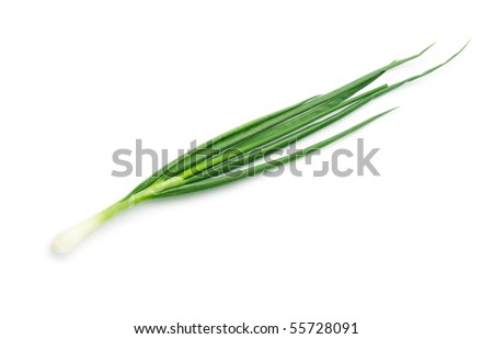 Spring onions isolated on white - stock photo