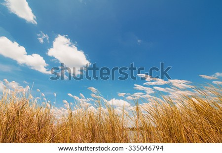 Spring or summer abstract nature background with grass and blue sky in the back - stock photo