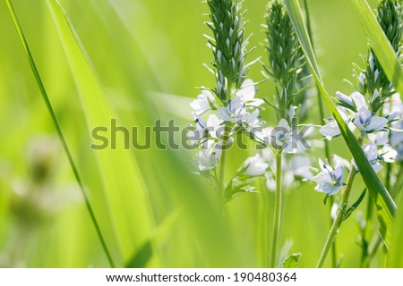 Spring or summer abstract nature background with grass in the meadow and flowers - stock photo