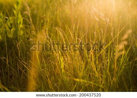 Spring or summer abstract nature background with grass in the meadow and sunset in the back - stock photo