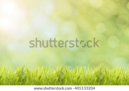 Spring or summer and abstract nature background with grass field - stock photo