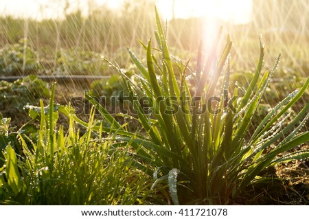 Spring or summer background of sunny garden with splashes of water, grain is added - stock photo