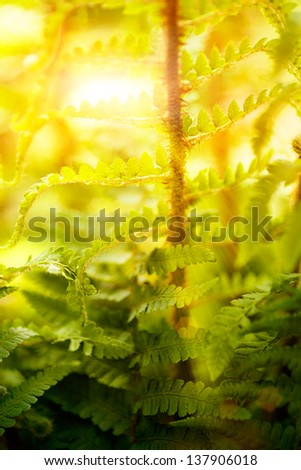Spring or summer background. Sun rays coming through the leaves of the fern forest. - stock photo
