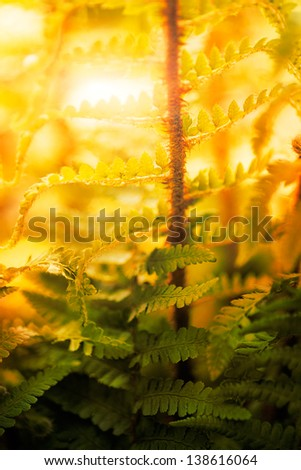 Spring or summer background Sun rays coming through the leaves of the fern forest. - stock photo