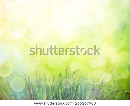 Spring or summer background with grass in the garden - stock photo