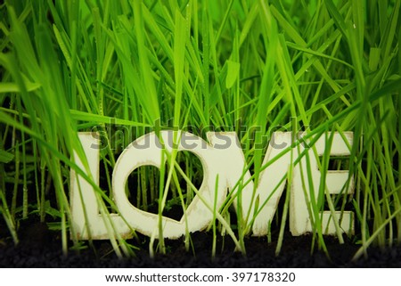 Spring or summer background with green grass. - stock photo