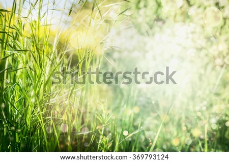Spring or summer grass background in garden or park, selective focus