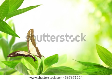 Spring or summer season abstract nature background with butterfly - stock photo